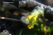 m3_083933_schluesselblume_fb