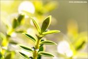 m3_914303_gruen_fb.jpg