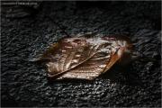 c21_615921_blatt_fb.jpg