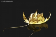 c21_618305_blatt_fb.jpg