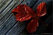 c21_622396_blatt_fb.jpg