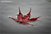 m3_087108_herbst_fb.jpg