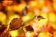 m3_115393_herbst_fb.jpg