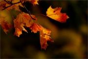 m3_129980_blatt_fb.jpg