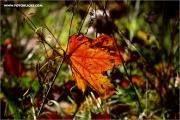 m3_131822_blatt_fb.jpg
