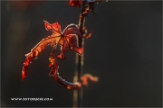 m5_162210_ahorn_fb
