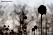 mf_133810_winter_fb.jpg