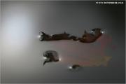 c21_617915_blatt_fb.jpg