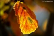 m3_114722_hamamelis_fb.jpg