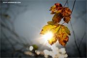 m3_115375_blatt_fb.jpg