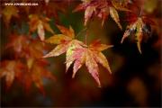 m3_120332_blatt_fb.jpg