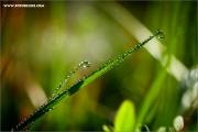 m3_129410_gras_fb.jpg
