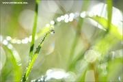 m3_129439_gras_fb.jpg