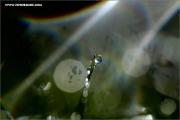 m3_129449_gras_fb.jpg