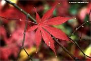m3_939562_blatt_fb.jpg