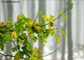 c10976_winter_fc2.jpg