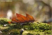 c21_624675_blatt_fb.jpg