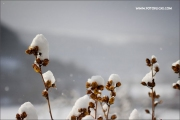 d100_165585_winter_fb
