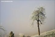 m3_121159_apfelbaum_fb.jpg
