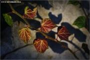m3_841523_efeu_fb.jpg