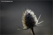 m3_911831_stachelding_fb.jpg