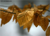 c17369_blatt_fc.jpg