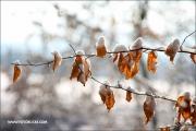 c20_093595_winterwald_fb