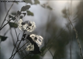 c20_560918_winter_fb.jpg