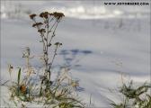 c20_561028_schnee_fb.jpg