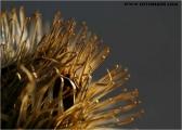 c20_619363_pflanze_fb.jpg