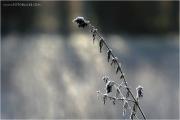 c21_709099_rauhreif_fb.jpg