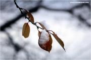 c21_743942_winter_fb.jpg
