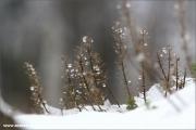 d100_152411_winter_fb.jpg