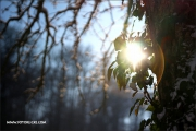 d100_165226_winter_fb