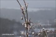 d100_165616_winter_fb