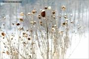 m3_104396_winter_fb.jpg