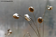 m3_104421_sonnenblume_fb.jpg