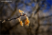 m3_121110_winter_fb.jpg
