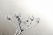 m3_126965_winter_fb.jpg