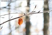 m3_127392_winter_fb.jpg