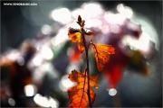 m3_128106_blatt_fb.jpg