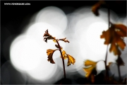 m3_128112_blatt_fb.jpg
