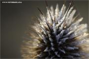 m3_911840_stachelding_fb.jpg