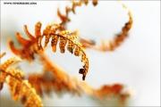 m3_914097_farn_fb.jpg