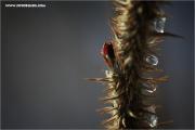 m3_915563_stachelkram_fb.jpg