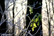 mf_121076_winter_fb.jpg