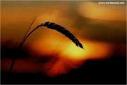 c21_728906_su_fb.jpg