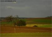 c052540_gundelsheim_fc.jpg
