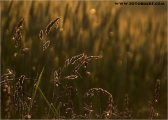 c20_521675_gras.jpg