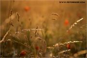 c20_663918_feld_fb.jpg
